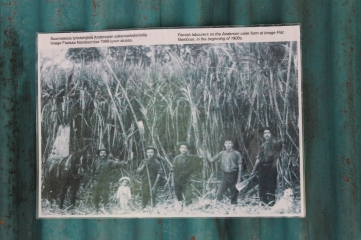The workers and the sugar cane